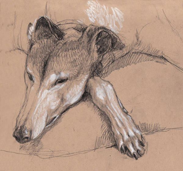 Sleeping Greyhound Art Print
