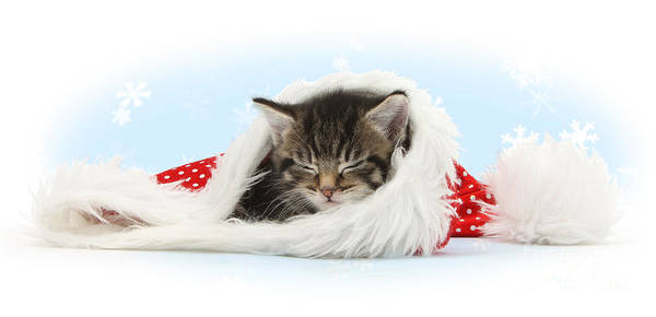 Photograph - Sleeping In Santa Hat by Warren Photographic