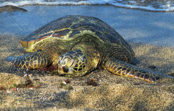Photograph - Sleeping On The Sand by Pamela Walton