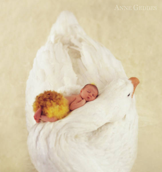 Swan Photograph - Sleeping Swan by Anne Geddes