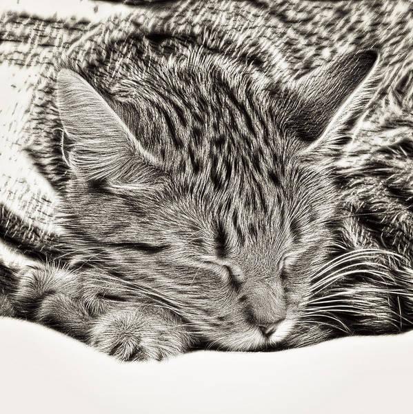 Wall Art - Photograph - Sleeping Tabby by Tom Gowanlock