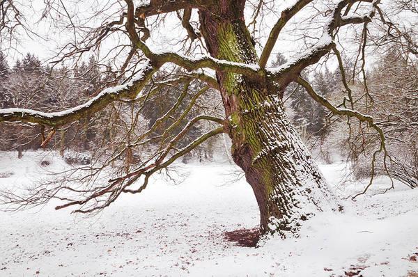 Photograph - Sleeping Winter Giant. Pruhonice Park by Jenny Rainbow