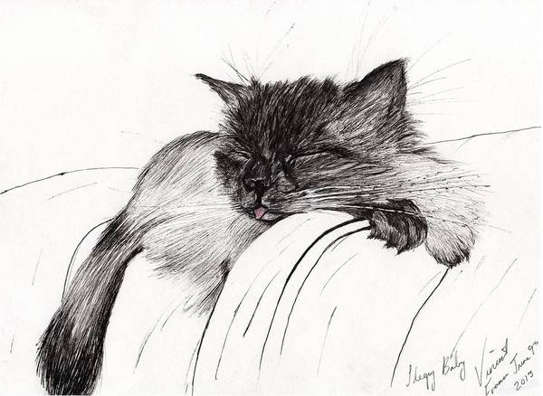 Pussycat Drawing - Sleepy Baby by Vincent Alexander Booth