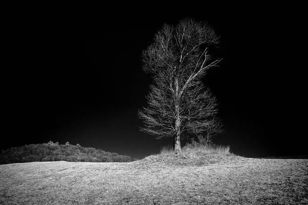 Photograph - Sleepy Hollow Tree by Dave Beckerman