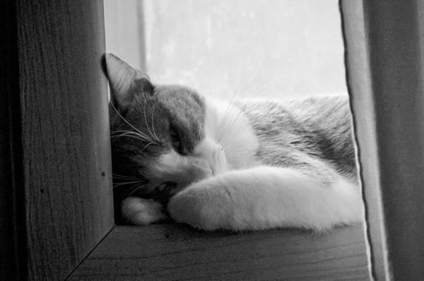 Sleepy Kitty Art Print