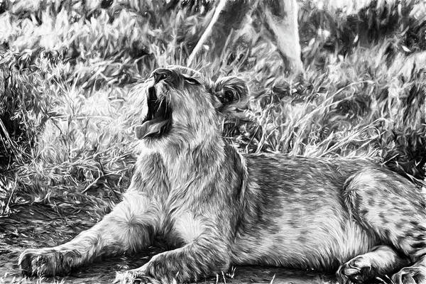 Photograph - Sleepy Lion Cub In Black And White by Kay Brewer