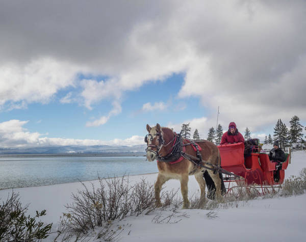 Photograph - Sleigh Ride by Martin Gollery