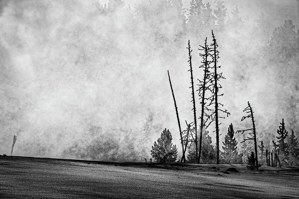 Photograph - Slender Trees By The Thermal - Yellowstone by Stuart Litoff