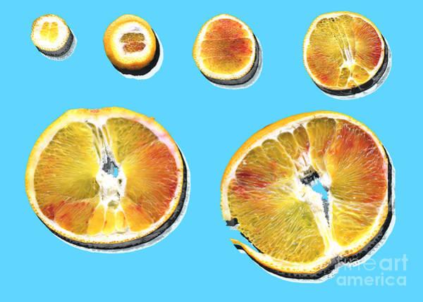Ingredient Digital Art - Slices Of Orange With Shadow Decomposed. by Stefano Gervasio