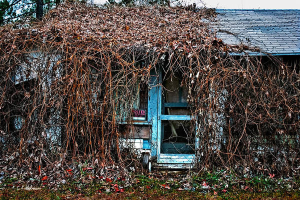 Photograph - Slightly Overgrown by Christopher Holmes