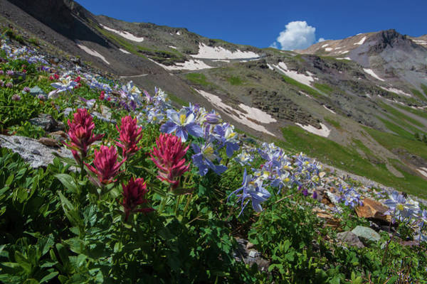 Wall Art - Photograph - Slippery Slope Of Indian Paintbrush And Columbine by Bridget Calip