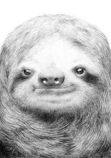 Funny Wall Art - Drawing - Sloth by Eric Fan