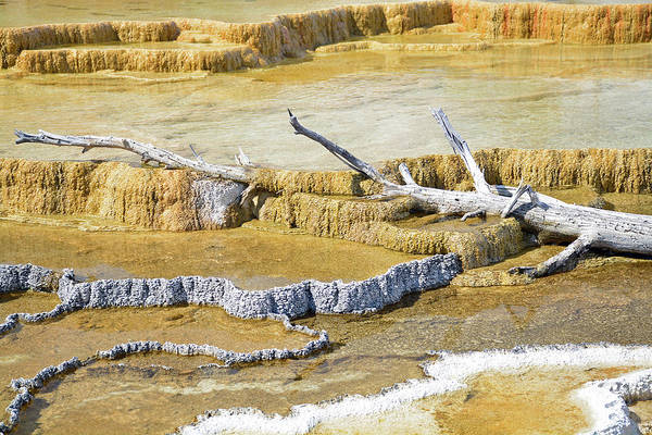 Photograph - Slow Burial In Yellowstone by Bruce Gourley