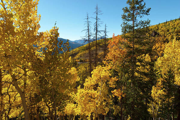 Photograph - Slumgullion Pass Autumn Landscape by Cascade Colors