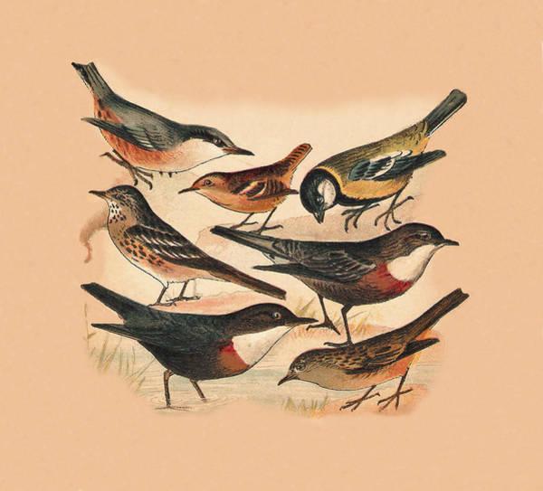 Mixed Media - Small Birds by Eric Kempson