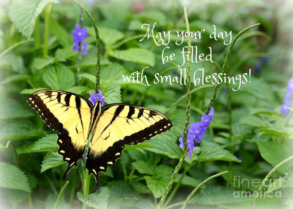 Photograph - Small Blessings  by Carol Groenen