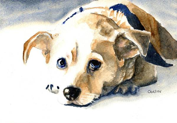 Pedigree Painting - Small Dog With Tan Short Hair  by Carlin Blahnik CarlinArtWatercolor