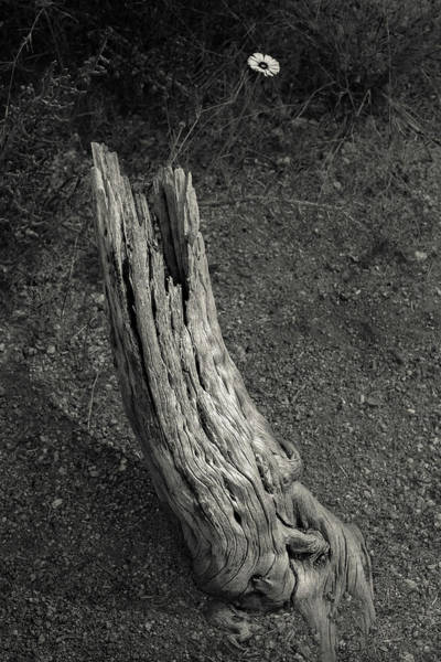 Desert Flower Photograph - Small Life by Joseph Smith