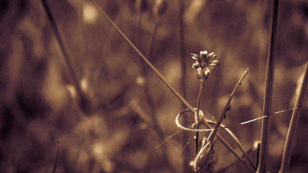 Photograph - Small by Lora Lee Chapman