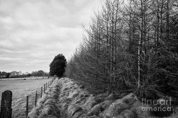 Smallholding Photograph - Small Patch Of Evergreen Sitka Spruce Woodland Ballymena, County Antrim, Northern Ireland, Uk by Joe Fox