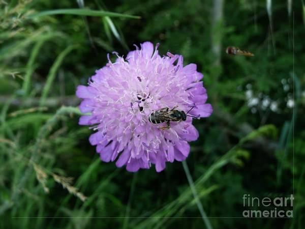 Photograph - Small Purple Flower by Jean Bernard Roussilhe