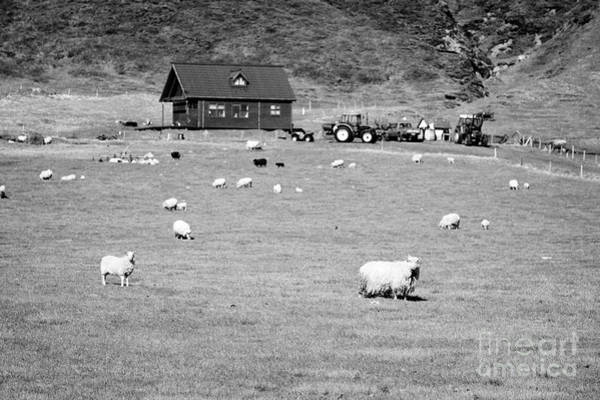Smallholding Photograph - small sheep farm in Iceland by Joe Fox