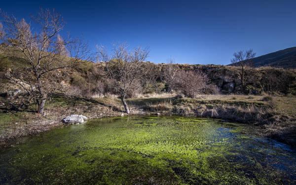 Vegetal Photograph - Small Swamp by Hernan Bua