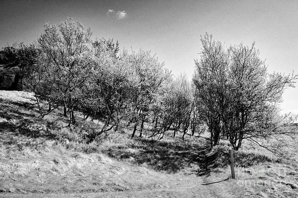 Wall Art - Photograph - small trees at entrance to dverghamrar dward rocks southern Iceland by Joe Fox