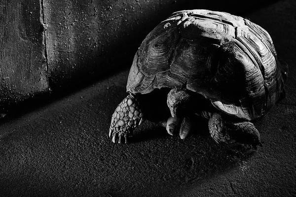 Photograph - Small Turtle Exploring The Surroundings by Fine Art Photography Prints By Eduardo Accorinti