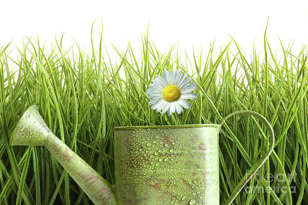 Wall Art - Photograph - Small Watering Can With Tall Grass Against White by Sandra Cunningham