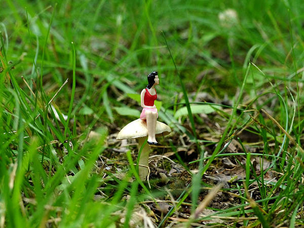 Photograph - Small World - Waiting In The Woods by Richard Reeve