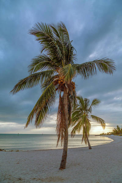 Uplift Photograph - Smathers Beach Coconut Sunset by Betsy Knapp