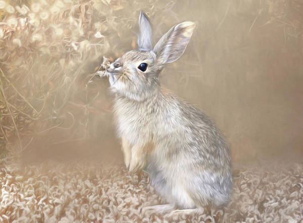 Cottontail Wall Art - Photograph - Smell Test by Donna Kennedy