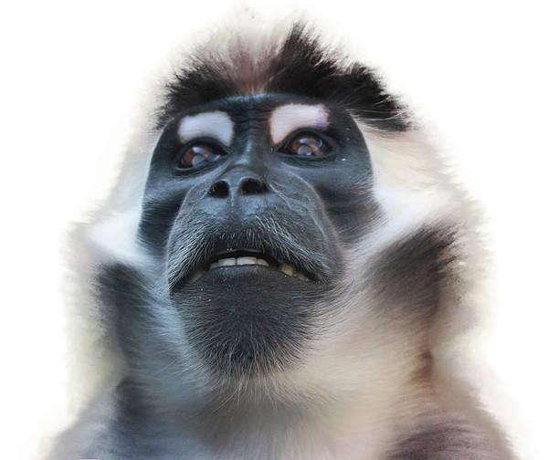 Monkey Wall Art - Photograph - Smile by Martin Newman