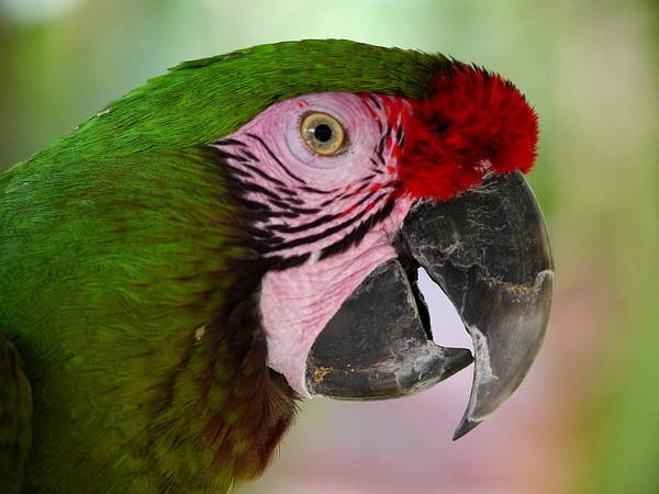 Photograph - Smile Of A Parrot by Richard Reeve