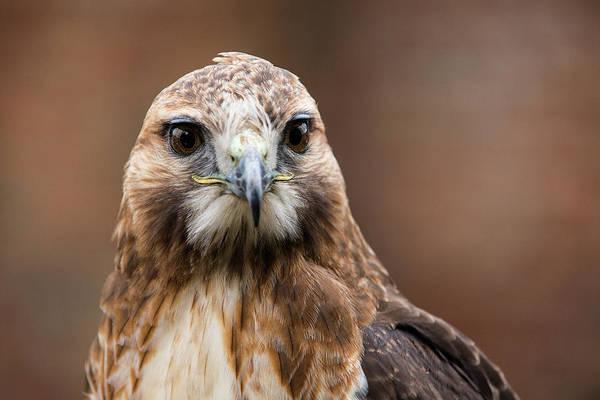 Photograph - Smiling Bird Of Prey by Dennis Dame