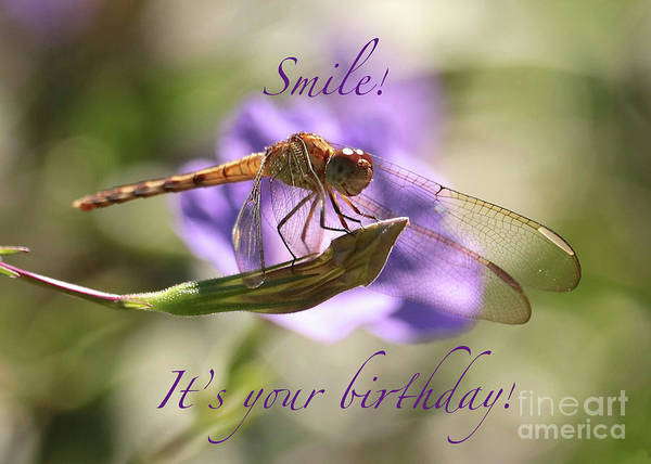 Photograph - Smiling Dragonfly Birthday Card by Carol Groenen