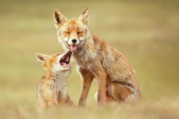 Wall Art - Photograph - Smiling Foxes On World Smile Day by Roeselien Raimond