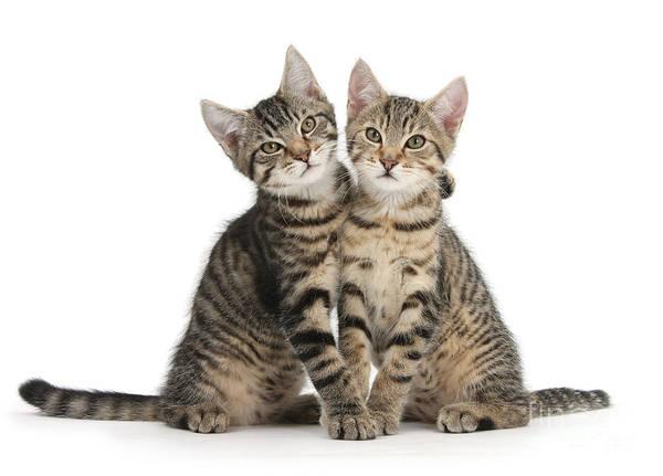 Photograph - Smitten Kitten Hug by Warren Photographic