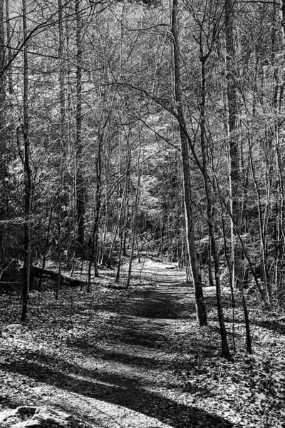 Photograph - Smokies Trail Black And White by Sharon Popek