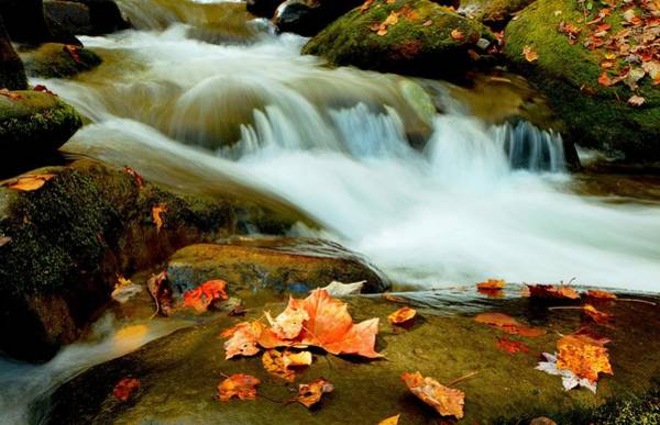 Photograph - Smoky Mountain Fall Leaves by Carol Montoya