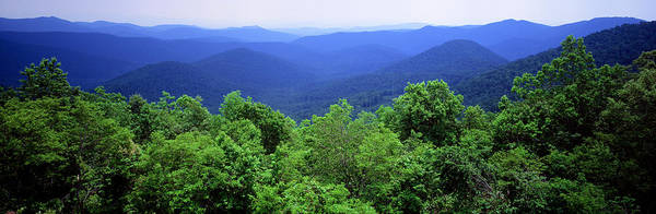 Thicket Photograph - Smoky Mountain National Park by Panoramic Images