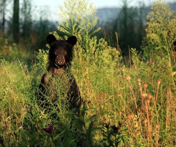 Photograph - Smoky Mountain Staredown by Doug McPherson