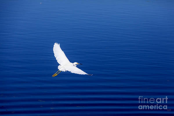 Photograph - Smooth Sailing by David Millenheft