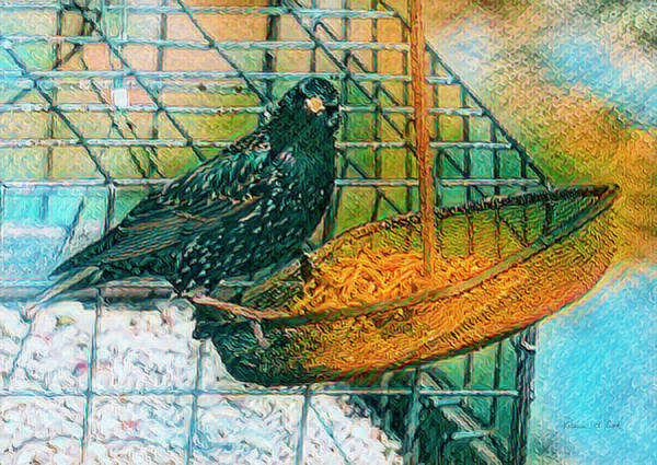 Photograph - Smug Starling by Bellesouth Studio