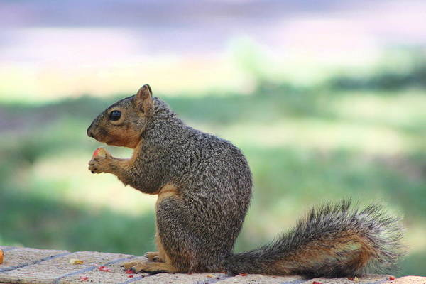 Photograph - Snack Time by Colleen Cornelius