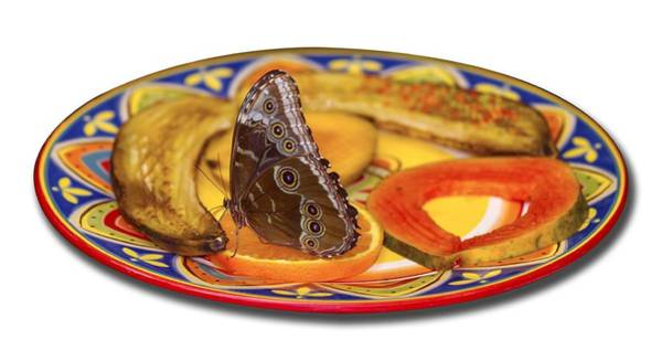 Photograph - Snacking Butterfly by Bob Slitzan