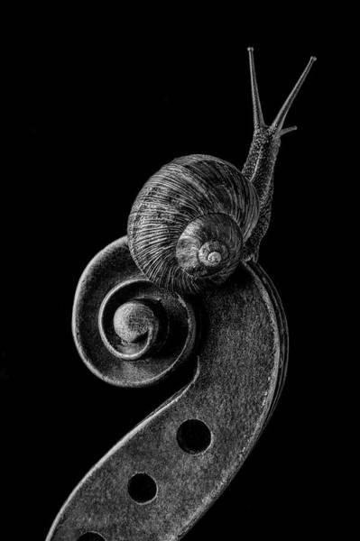 Wall Art - Photograph - Snail Exploring Violin Scroll by Garry Gay