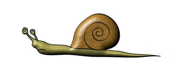 Wall Art - Digital Art - Snail by Michal Boubin