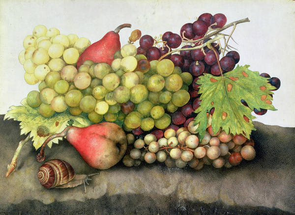 Veg Painting - Snail With Grapes And Pears by Giovanna Garzoni